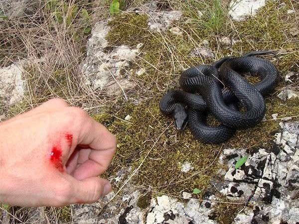 Mơ thấy rắn cắn - Những điều bí ẩn và con số may mắn?