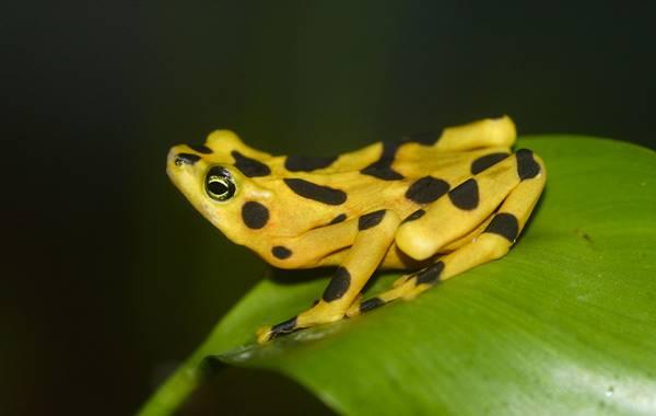 Nằm mơ thấy ếch vàng là điềm báo trước gì? nên đánh lô đề số mấy